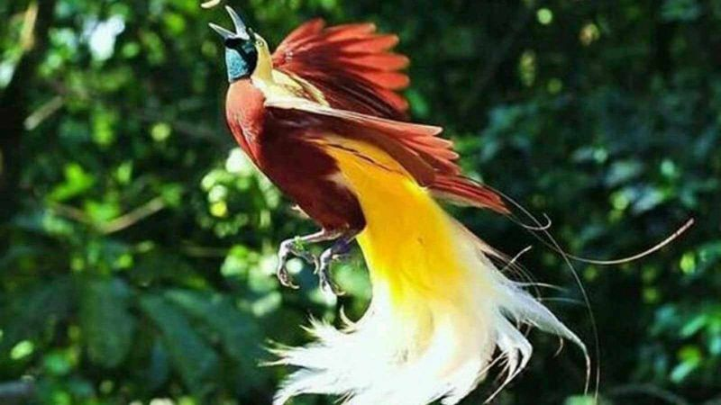 Fauna tipe Australis Penyebaran Fauna di Indonesia