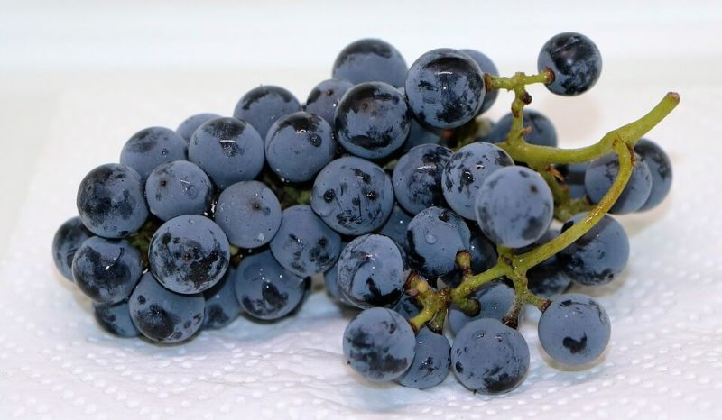 anggur muda diet Makanan untuk mengecilkan perut buncit