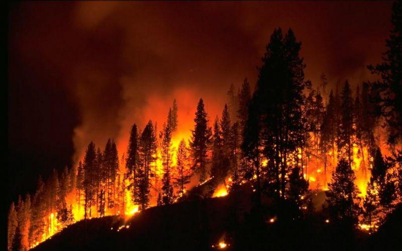 bencana kebakaran hutan