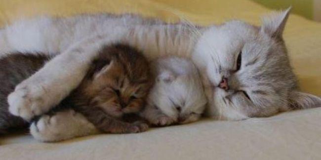 Gambar Hewan Kucing