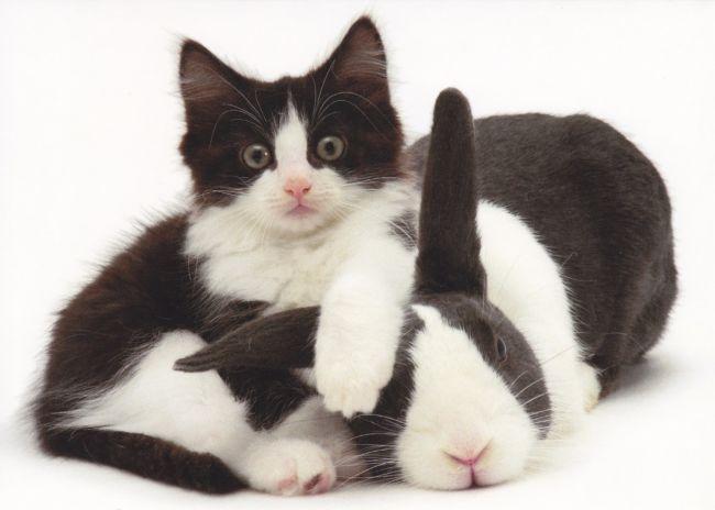 Gambar Kucing kelinci